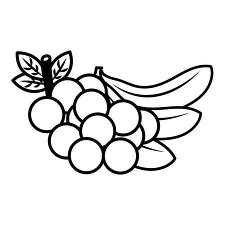 fruits fresh organic grapes and bananas vector illustration outline Çizim