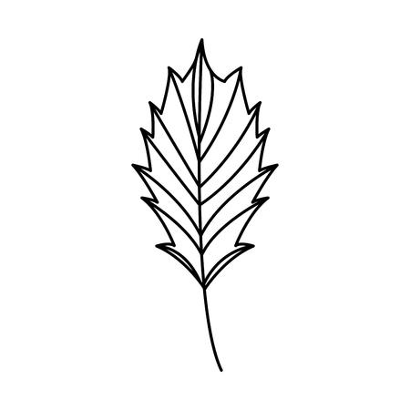 leaf nature on white background vector illustration