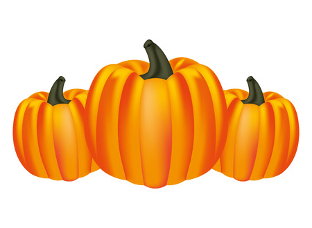 harvest pumpkins fresh on white background vector illustration