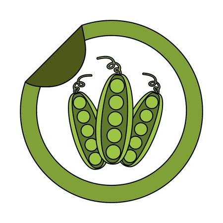 peas fresh vegetable sticker market vector illustration