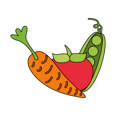 tomato carrot and peas fresh on white background vector illustration