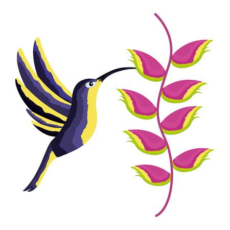 hummingbird bird heliconia flower tropical vector illustration Foto de archivo - 111372404