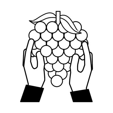 hands holding grapes on white background vector illustration Foto de archivo - 111391255