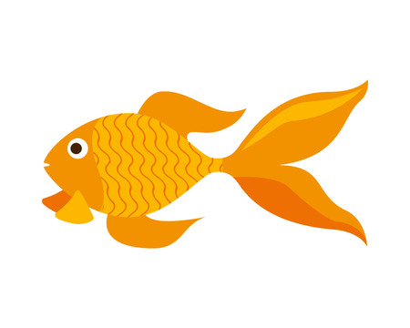goldfish domestic on white background vector illustration