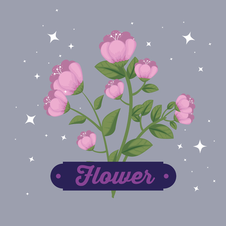 nature flowers plants with petals and emblem vector illustration