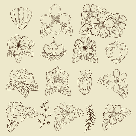 set outline flowers plants with petals and leaves vector illustration