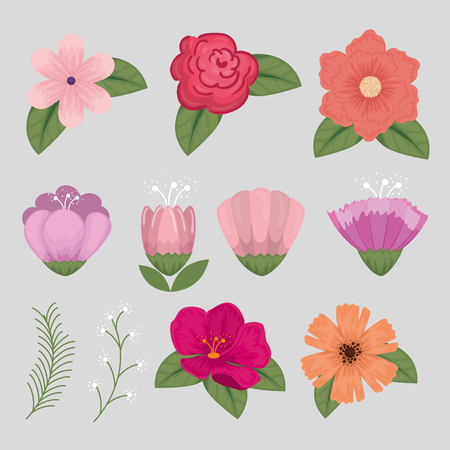 set flowers style with natural petals and leaves vector illustration