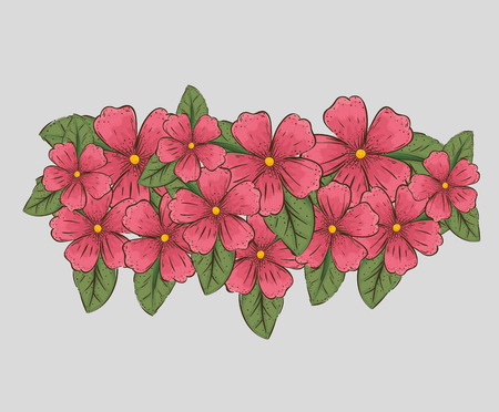 flowers plants with nature leaves and petals vector illustration