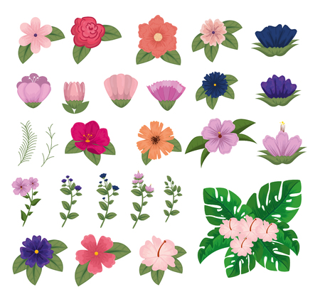 set exotic flowers with natural leaves and petals vector illustration