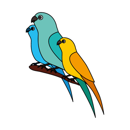 canary and parrots birds on branch vector illustration  イラスト・ベクター素材