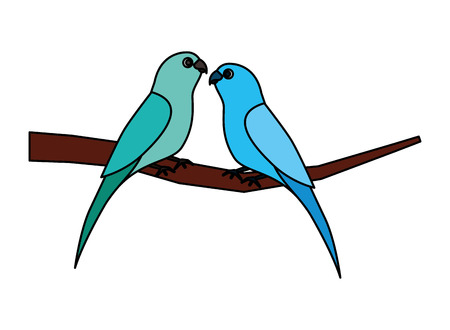two parrots bird on branch vector illustration