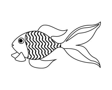 goldfish domestic on white background vector illustration