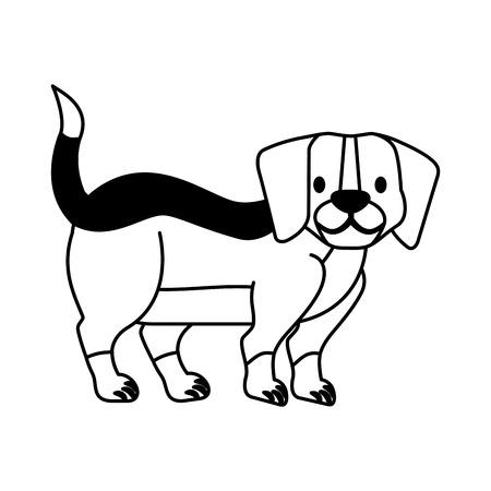 Chien beagle sur fond blanc vector illustration vector illustration