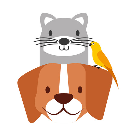 Animaux de compagnie chien et chat oiseau canari vector illustration