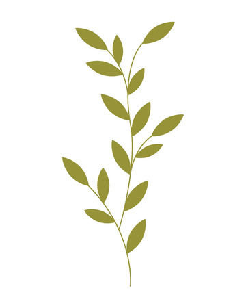 floral leaves foliage on white background vector illustration