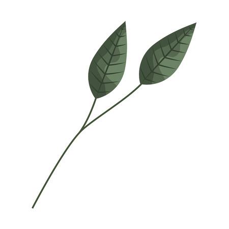 branch leaves nature on white background vector illustration