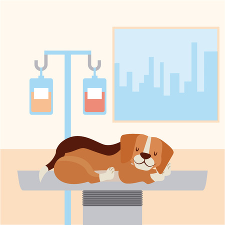 dog with iv stand medicine veterinary clinic petcare vector illustration