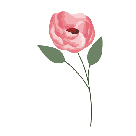 pink rose flower on white background vector illustration