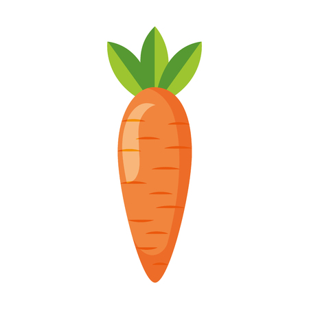 carrot fresh healthy food on white background vector illustration