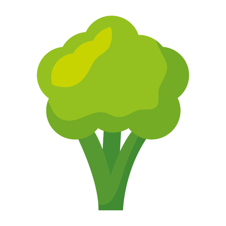 broccoli fresh healthy food on white background  vector illustration