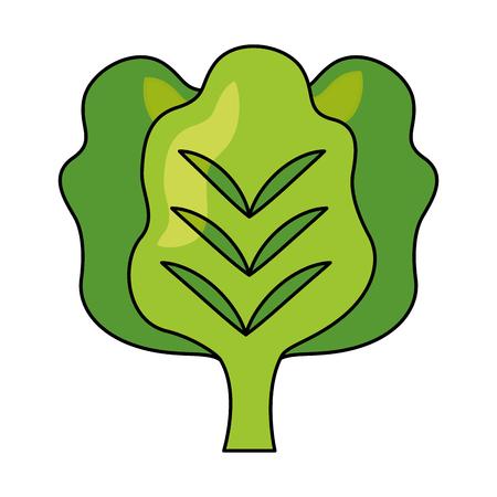 lettuce fresh healthy food on white background vector illustration Zdjęcie Seryjne - 127260787