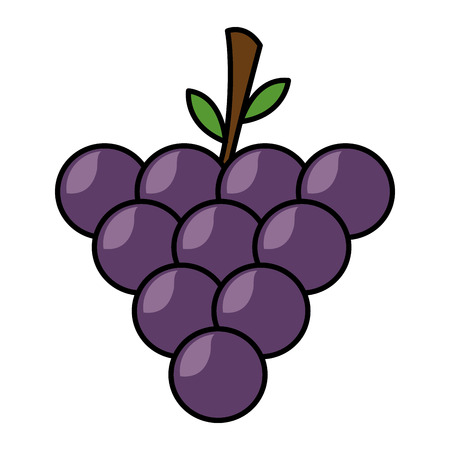 grapes fresh healthy food on white background vector illustration Illusztráció