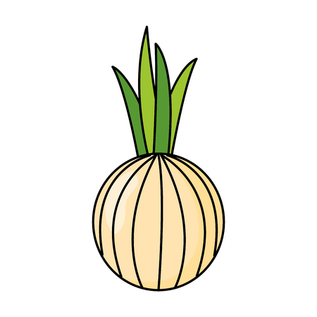 onion fresh healthy food on white background vector illustration Illustration