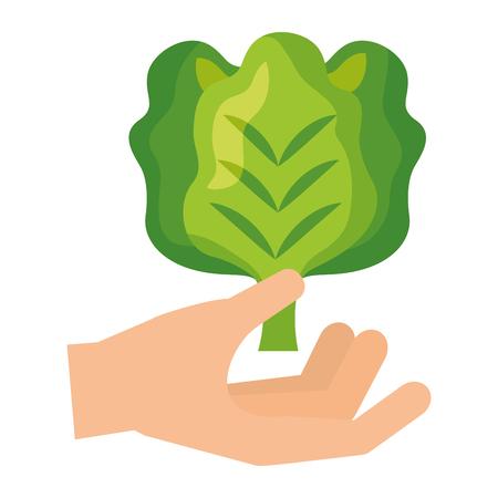 hand holding lettuce healthy food fresh vector illustration Illustration