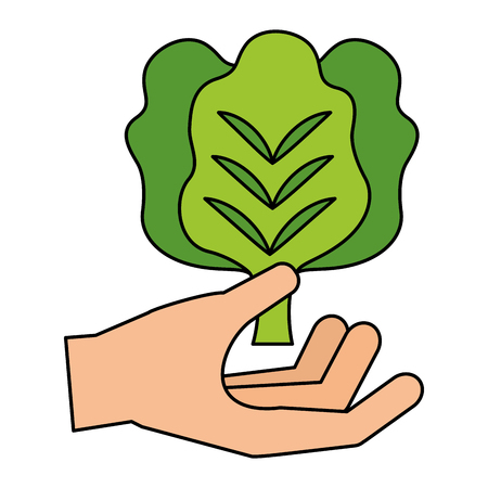 hand holding lettuce healthy food fresh vector illustration Illustration