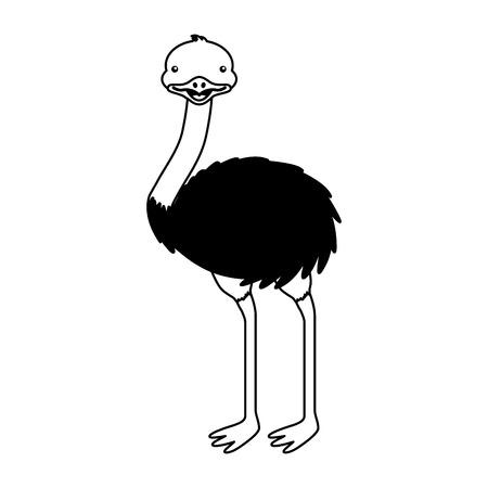 emu australian fauna on white background vector illustration