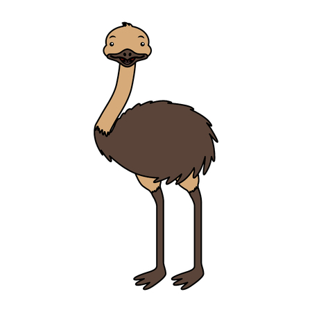 emu australian fauna on white background vector illustration