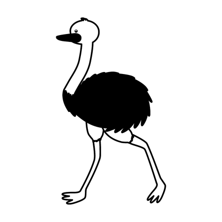 emu fauna on white background vector illustration Stok Fotoğraf - 127122871
