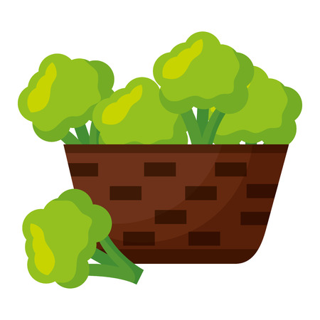 wicker basket with fresh broccoli vector illustration Illustration