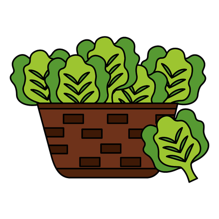 wicker basket with fresh lettuce vector illustration