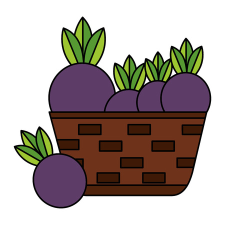 wicker basket with fresh beet vector illustration