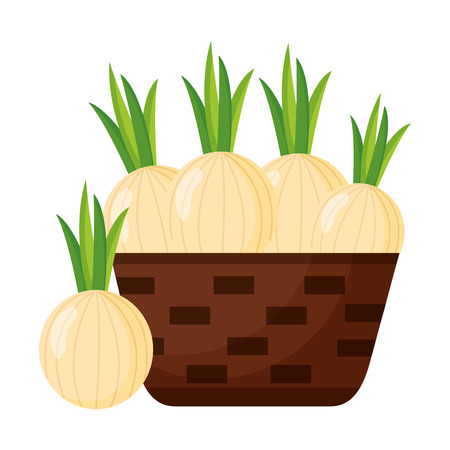 wicker basket with fresh onion vector illustration