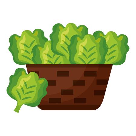 cesto di vimini con illustrazione vettoriale di lattuga fresca Vettoriali