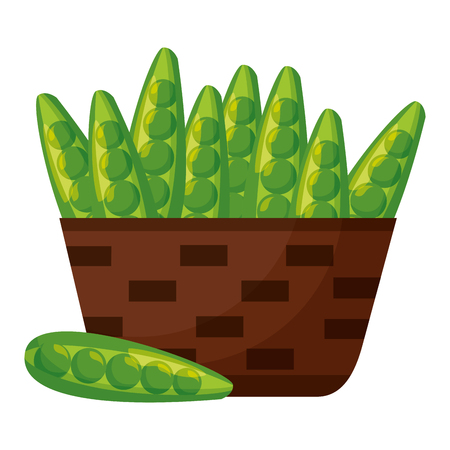 wicker basket with fresh peas bean vector illustration