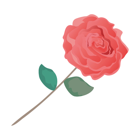 beauty rose with leafs vector illustration design