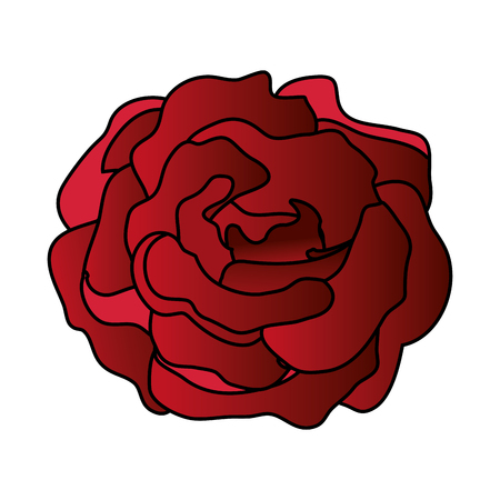 beauty rose isolated icon vector illustration design