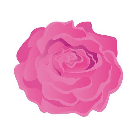 disegno dell'illustrazione di vettore dell'icona isolata rosa di bellezza