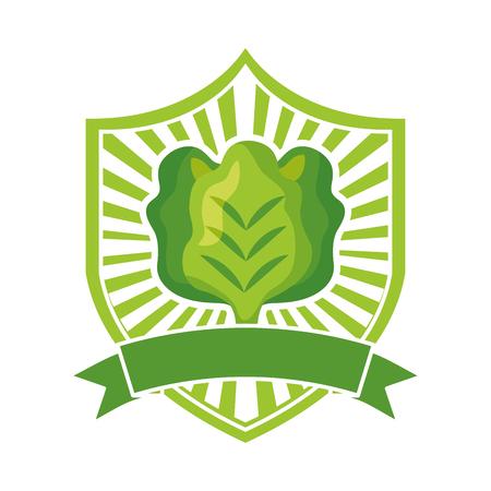 lettuce fresh healthy food emblem vector illustration 向量圖像