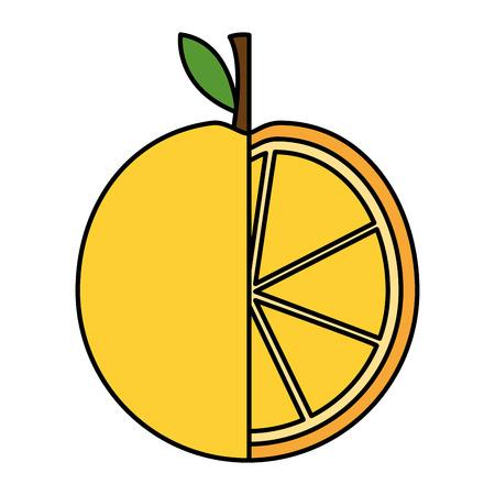 orange fruit on white background vector illustration