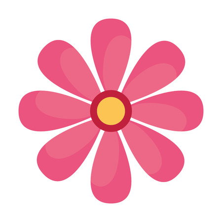 daisy flower on white background vector illustration