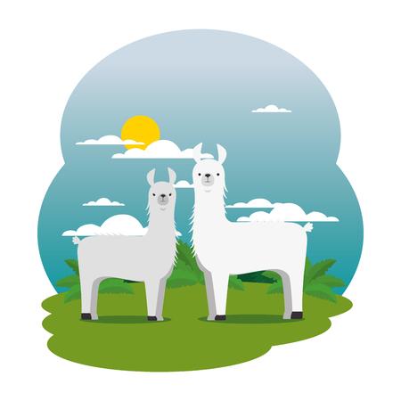 cute llamas couple in the field scene vector illustration design Illustration