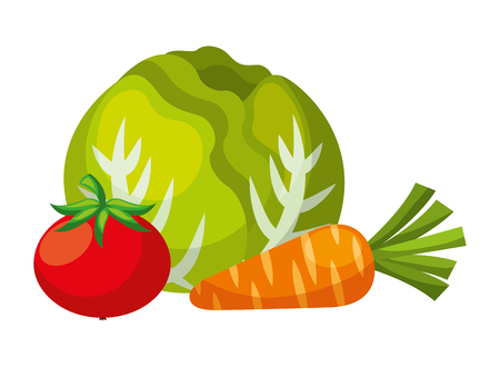 cabbage tomato and carrot vegetables food health vector illustration Çizim