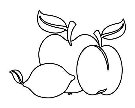 apricot lemon apple fruits food health vector illustration Imagens - 126014591