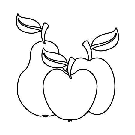 pear apple and mango fruits food health vector illustration