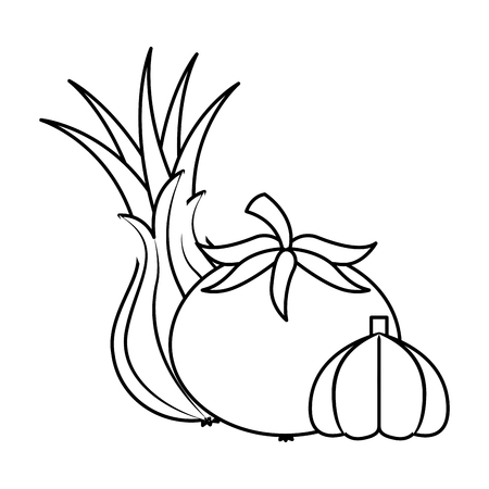 tomato garlic onion vegetables food health vector illustration