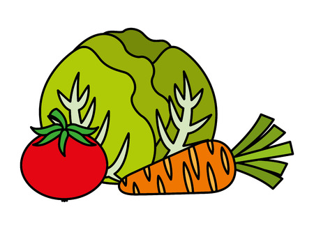 cabbage tomato and carrot vegetables food health vector illustration vector illustration